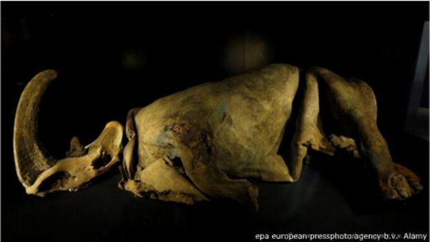 mummified_animals_from_the_ice_age_5